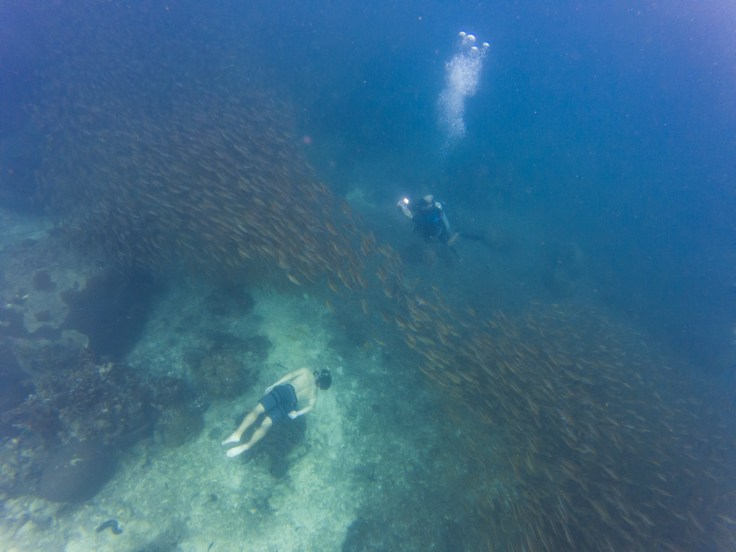 Thailande - Koh Tao - Snorkeling - plongeur et apneiste