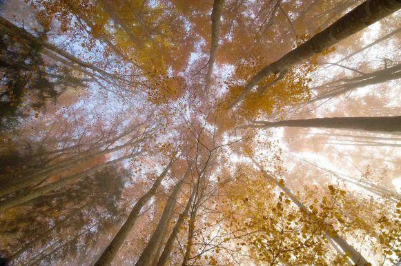 cime_arbres