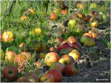 Paysage d'automne avec pommes tombées par terre
