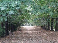 Ah! L'automne...