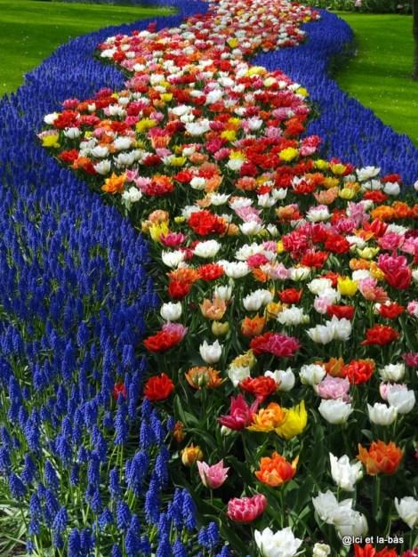 Chemin de tulipes
