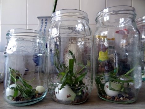 Bocaux remplis d'aromates pour préparer des cornichons maison