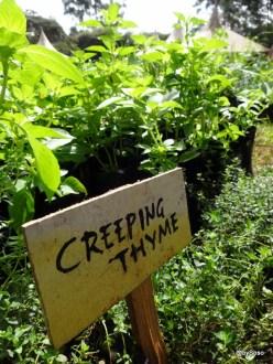 Plantes en vente aux marchés de noël de Nairobite de plantes