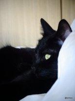Chat-noir-sur-le-lit