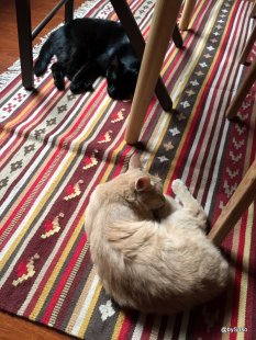 Chats-dorment-sur-tapis
