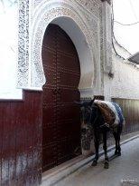 Ane-ruelle-médina-Maroc