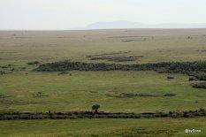 masai-mara-au-printemps
