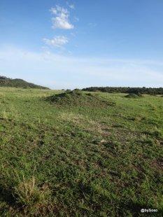 paysage-alpin-masai-mara