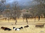 ranch-a-betail-yoani-yapperville