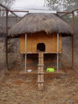 single-enclosure-yoani-yapperville