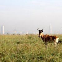 Nairobi, du safari pour touristes pressés