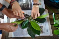 Seleccionando las hojas