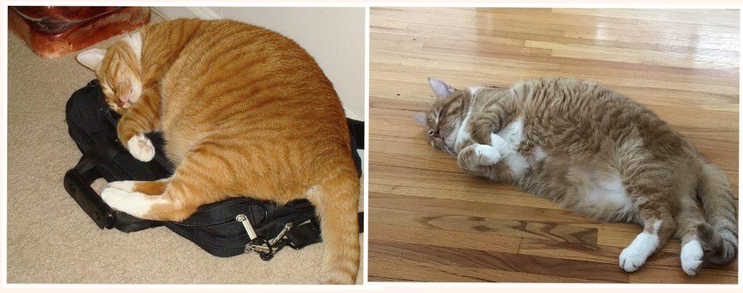 Mr. Boo Transformation