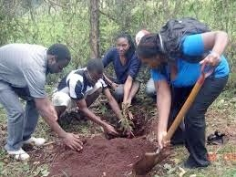Negligence Thwarts Tree Planting Efforts in Malawi