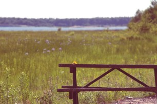 Picnic Table & Flowers