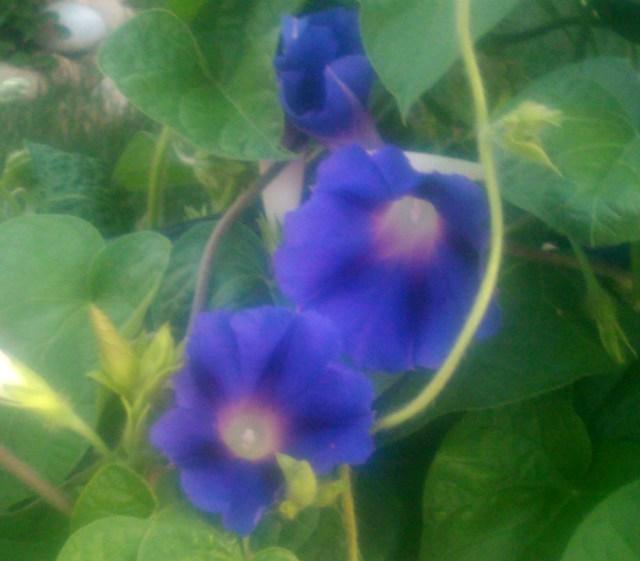 summer-flowers-nj-71611_5942402643_o