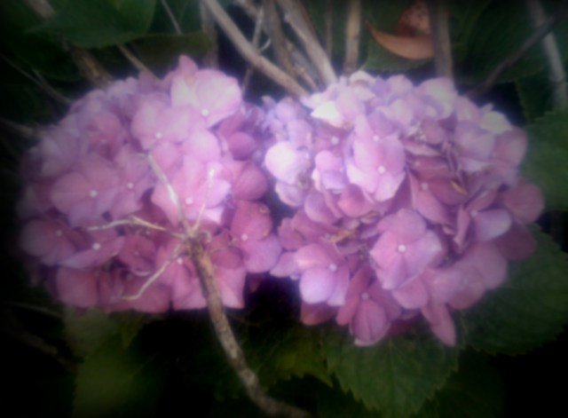 summer-flowers-nj-71611_5942959526_o