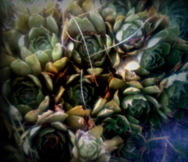 summer-flowers-nj-71611_5942959770_o