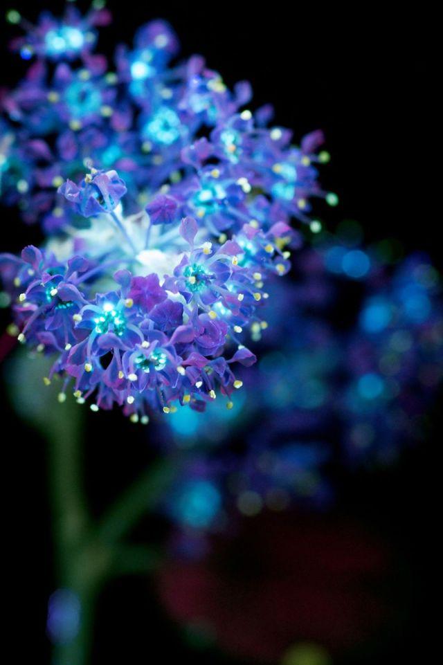 Mountain-Lilac-4-s-58e94fe9e501a__880