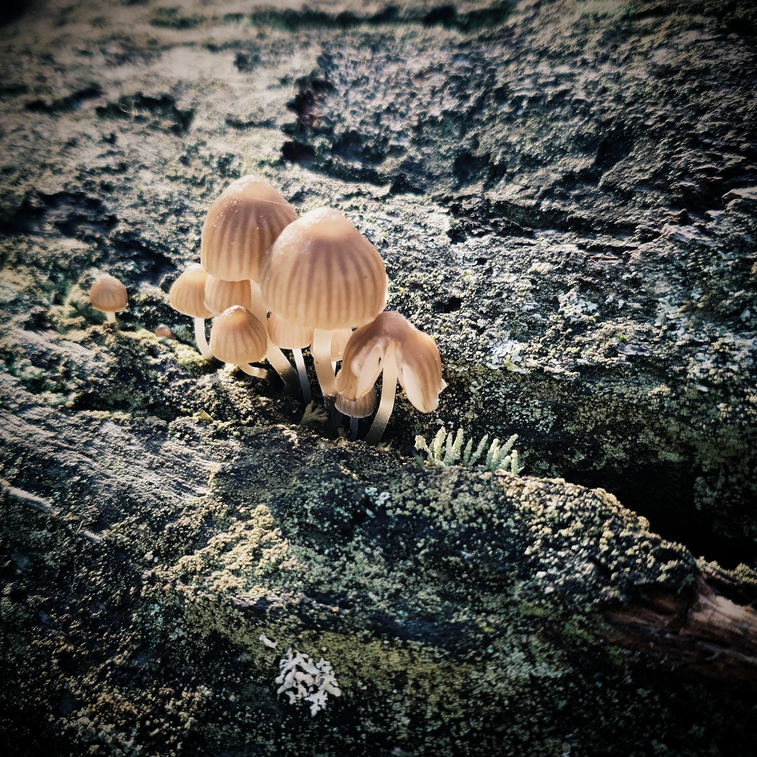 10 things mushrooms