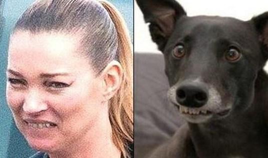 Celebrity Dogs 12
