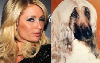 Celebrity Dogs 15