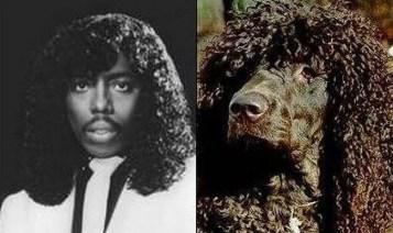 Celebrity Dogs 16