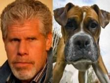 Celebrity Dogs 2