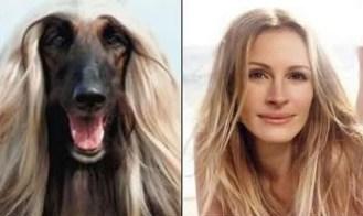 Celebrity Dogs 6