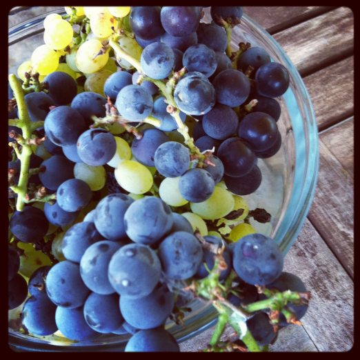 Grapes, homegrown.