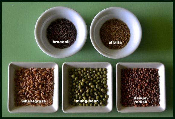 Todd's Seeds
