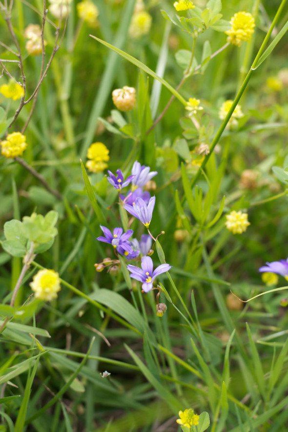 Purple Flowers An Unrefined Vegan