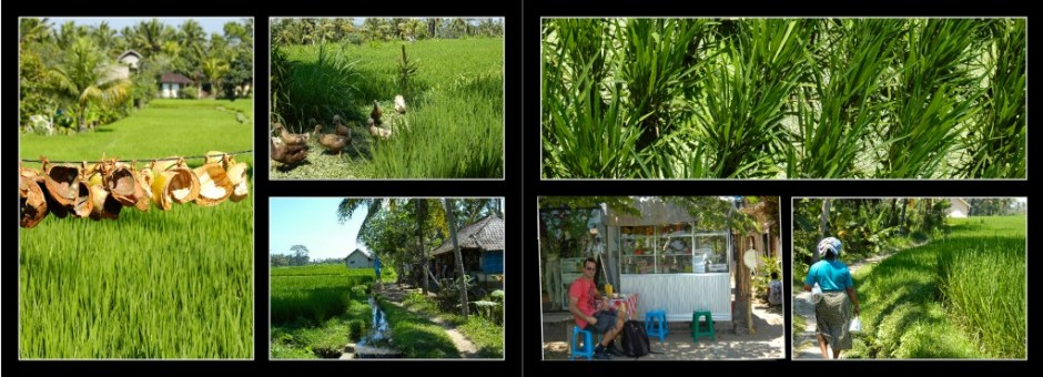 randonnée rizière2