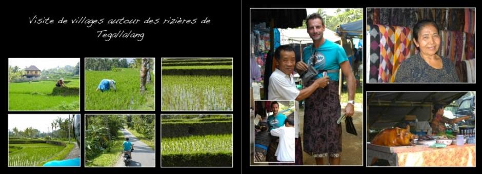 ubud rizières