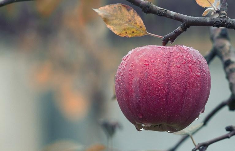 Juicy Fruit- Apples