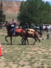 Packhorse Races