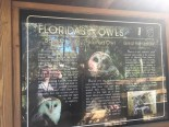 Info on owls in Florida