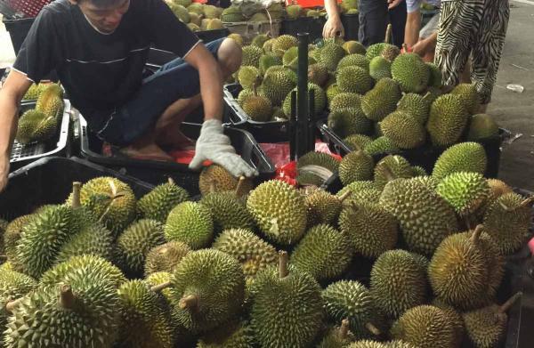 20150621_durian_STcopy