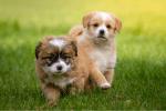 Kein Witz: Corona-Wahn im Endstadium – Jetzt auch Abstandsregeln für Hunde