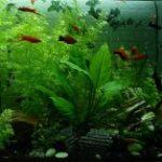 Gruppenlogo von Aquarienfreunde Oberberg
