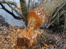 Foto Ein gefällter Baumstamm