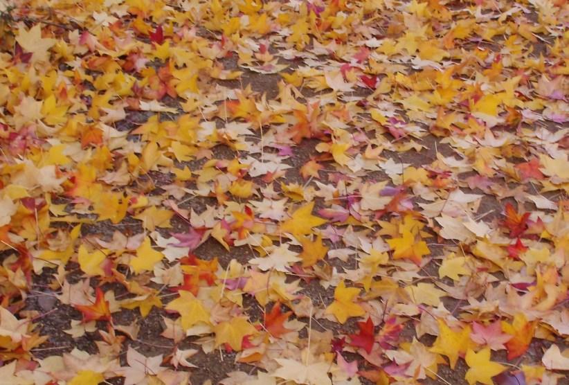 Herbstlaub am Boden (Foto: U. Sommer)