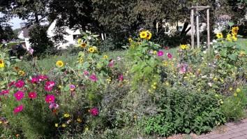 duftende Blumenwiesen...