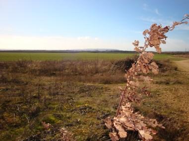 urige-Landschaft-Tagebau