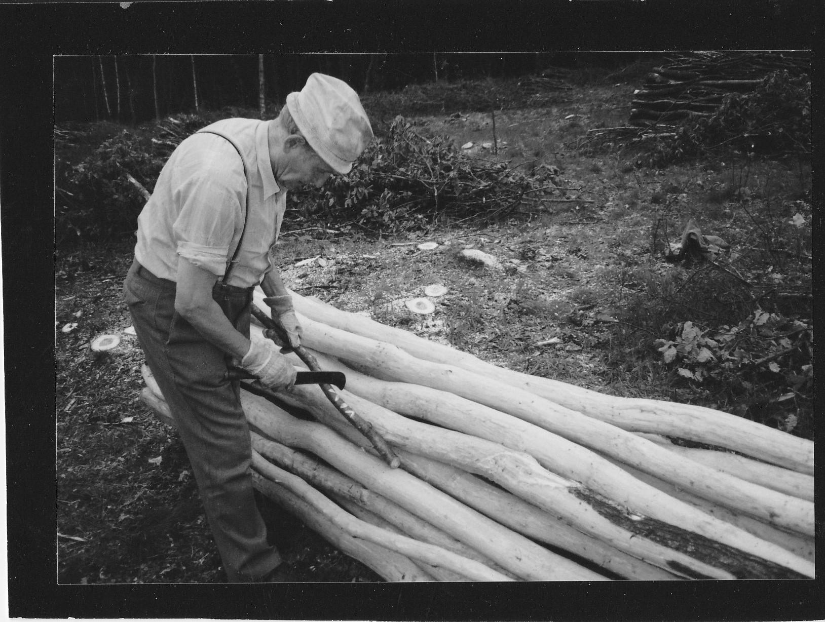 Im Hauberg. Ein Senior ritzt mit einer Sichel Markierungen in einen Ast