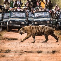 8 Most Incredible Animal Photos Of 2015