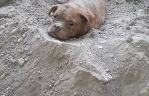 Man Was Out For A Walk When He Find The Dog Buried Alive