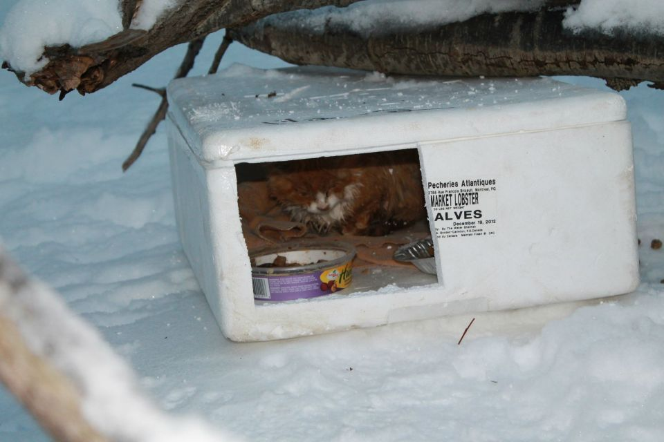 Man Came Across A Mysterious Box In The Snow