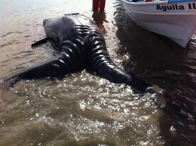 Mysterious Creature Was Discovered In Mexico