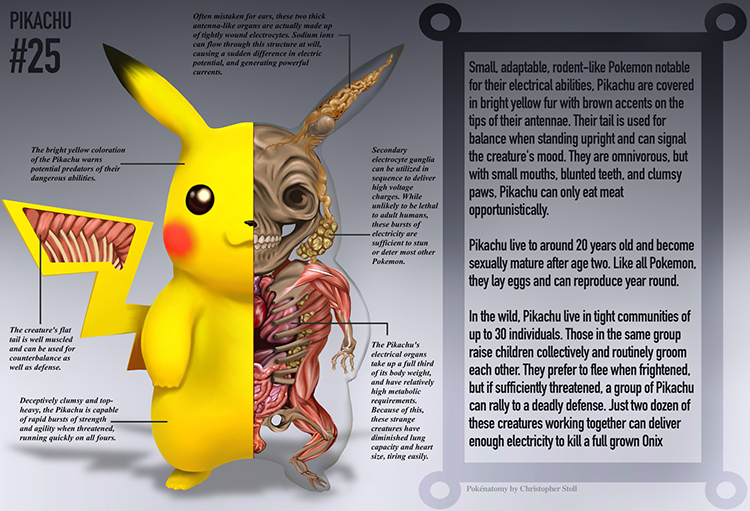 PokéNatomy, Anatomical Illustrations of the Innards of Popular Pokémon Characters